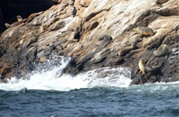 Farallon Islands Wildlife