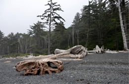 Mora Beach Olympic NP Washington