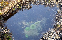 Tidal Pool Smelt Sands State Recreation Site Oregon