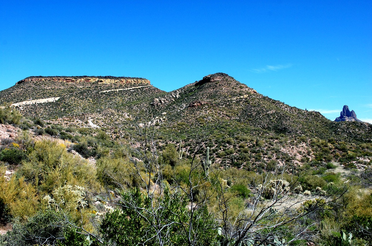 Edupic desert biome and habitat images for Pond plants mesa az