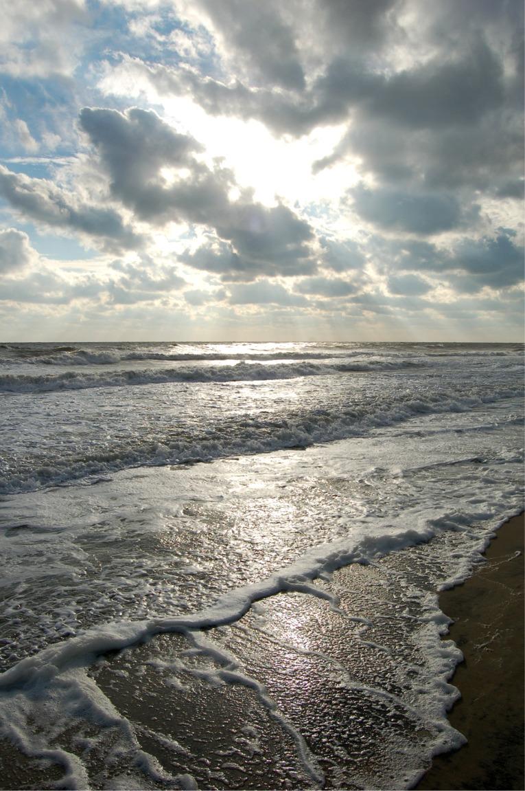 Edupic Coastal Biomes And Habitats