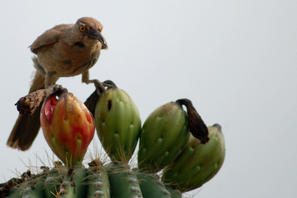 Edupic land bird images for Pond plants mesa az