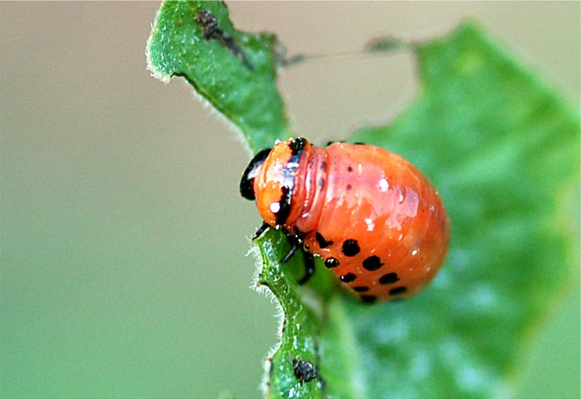 EduPic True Bug Images