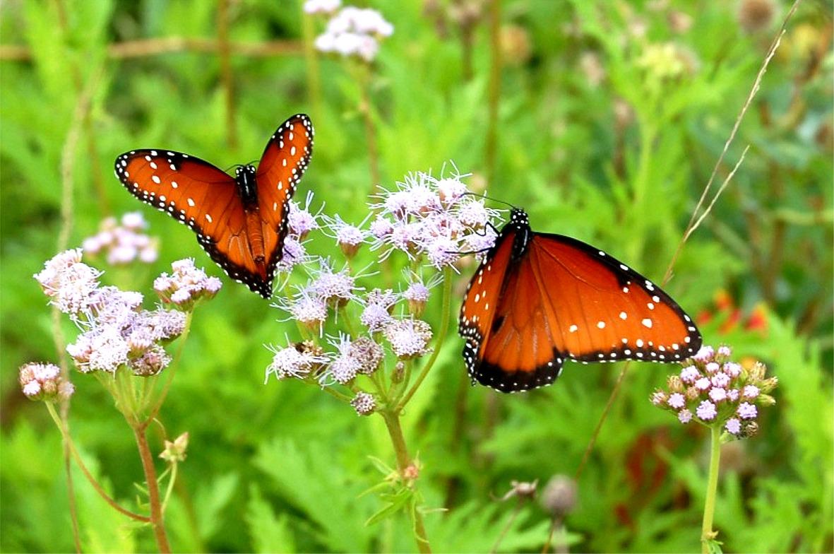Exotic Butterflies Wallpapers