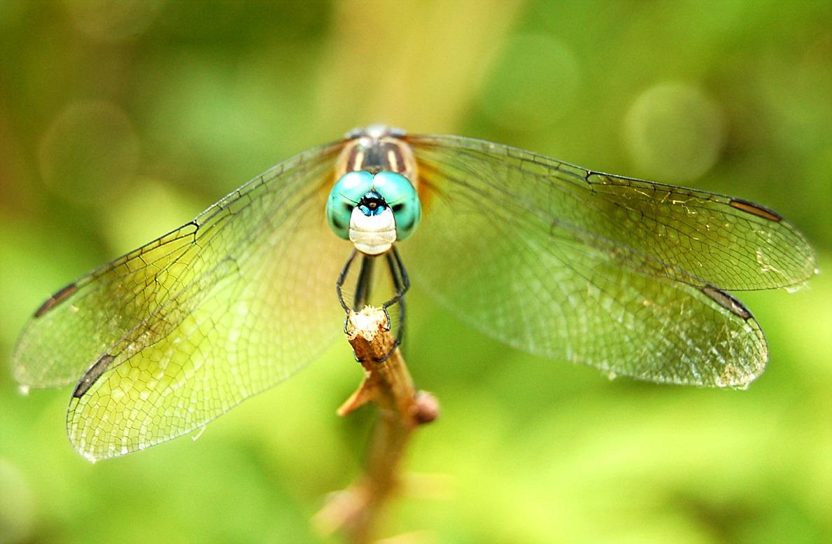 EduPic Dragonflies and Damselflies