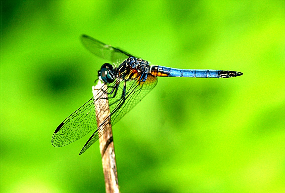 Edupic Dragonflies And Damselflies