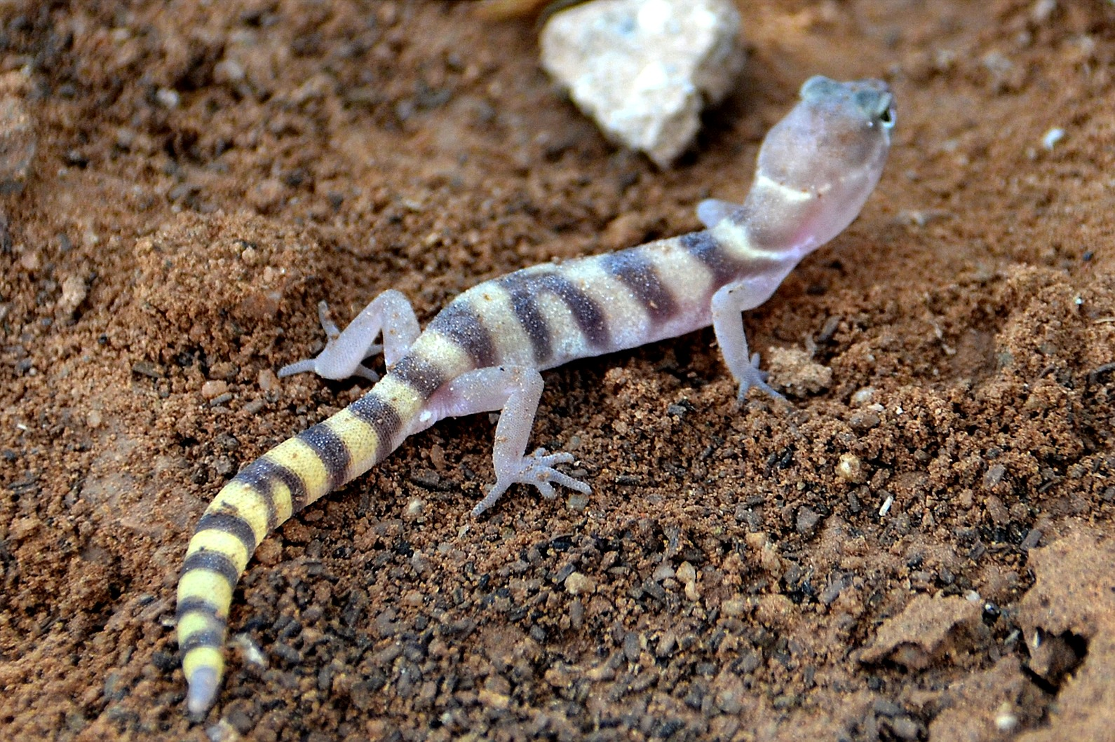 Pictures of poisonous lizards A List