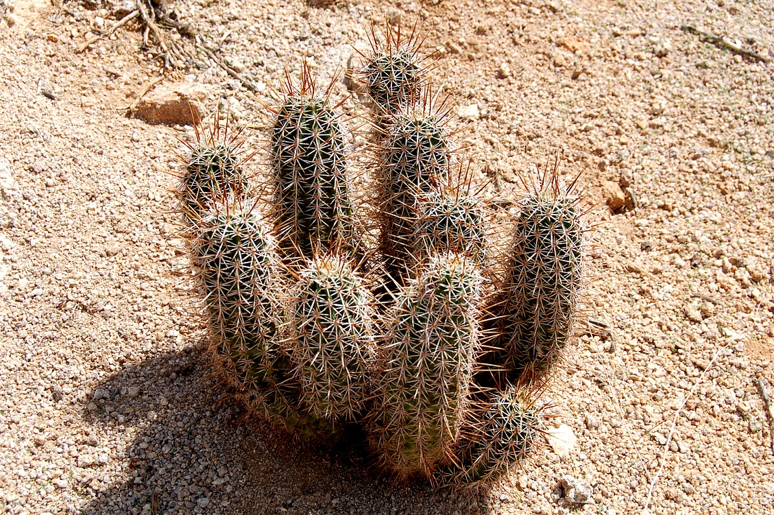 EduPic Cactus and Desert Plant Images