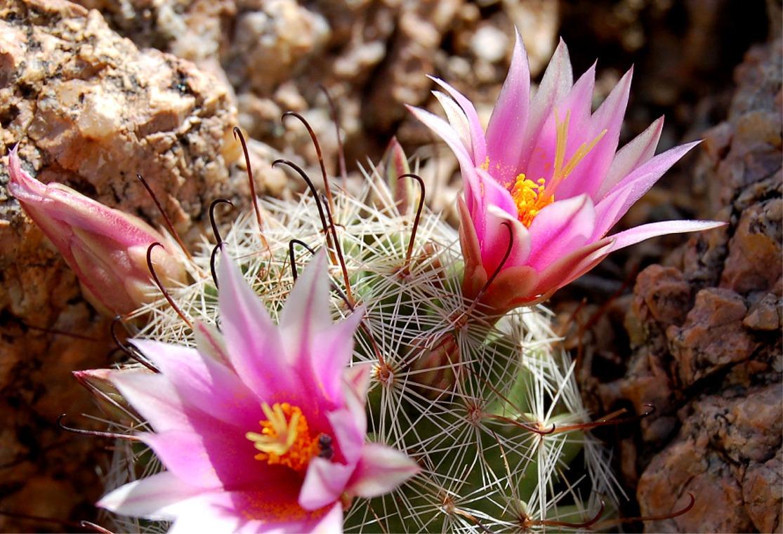EduPic Cactus and Desert Plant Images