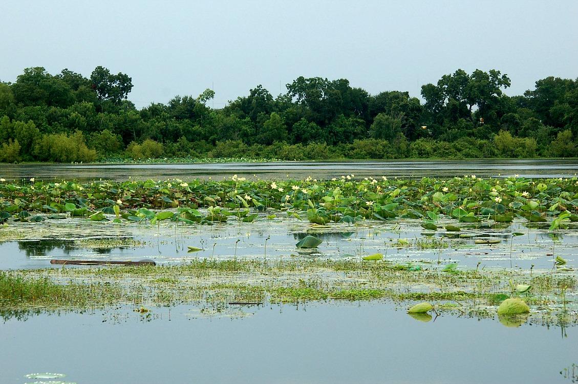 Edupic aquatic plant images for Pond aquatics