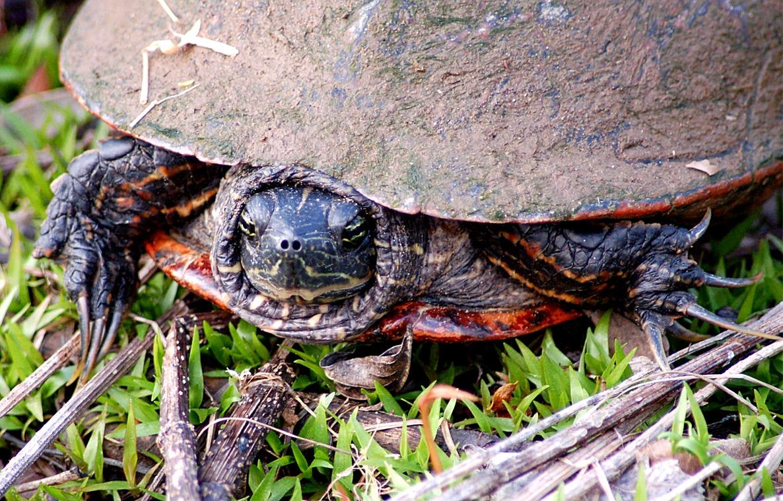 EduPic Reptile Images