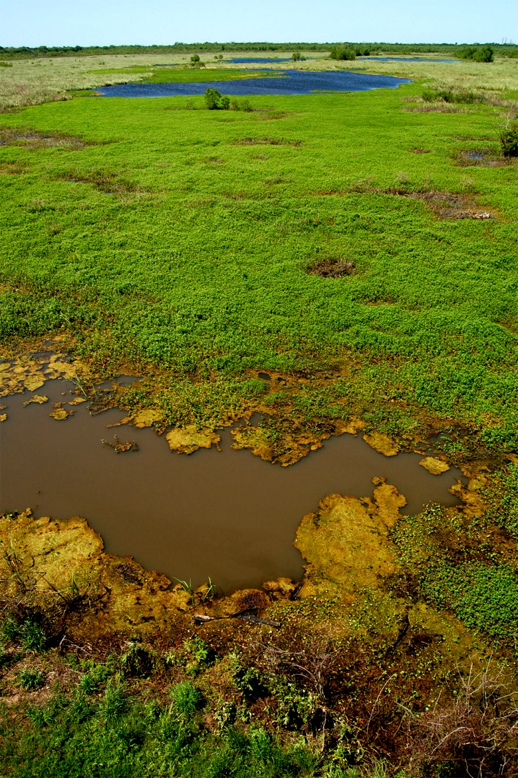 wetland ecosystem Wetland ecosystems are important to humans and wildlife for numerous reasons wetlands help to supply the world's fisheries by serving as a breeding ground for fish and shellfish.