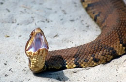 EduPic Snake Images