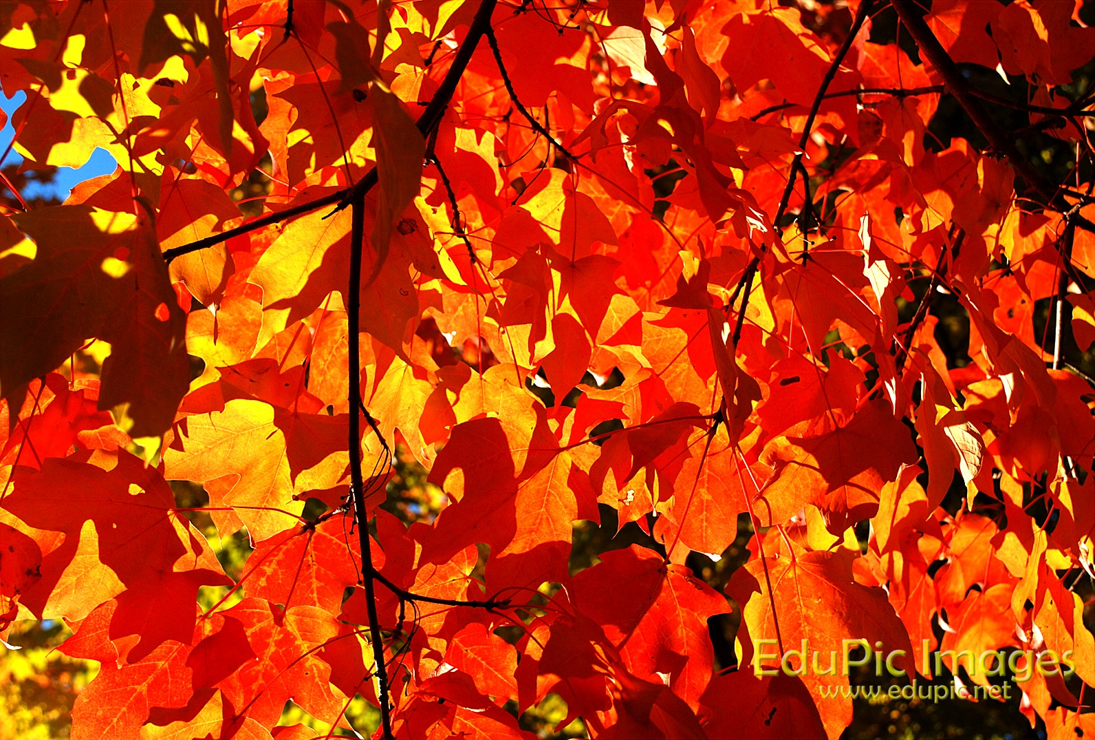 Fall Colors Desktop Image