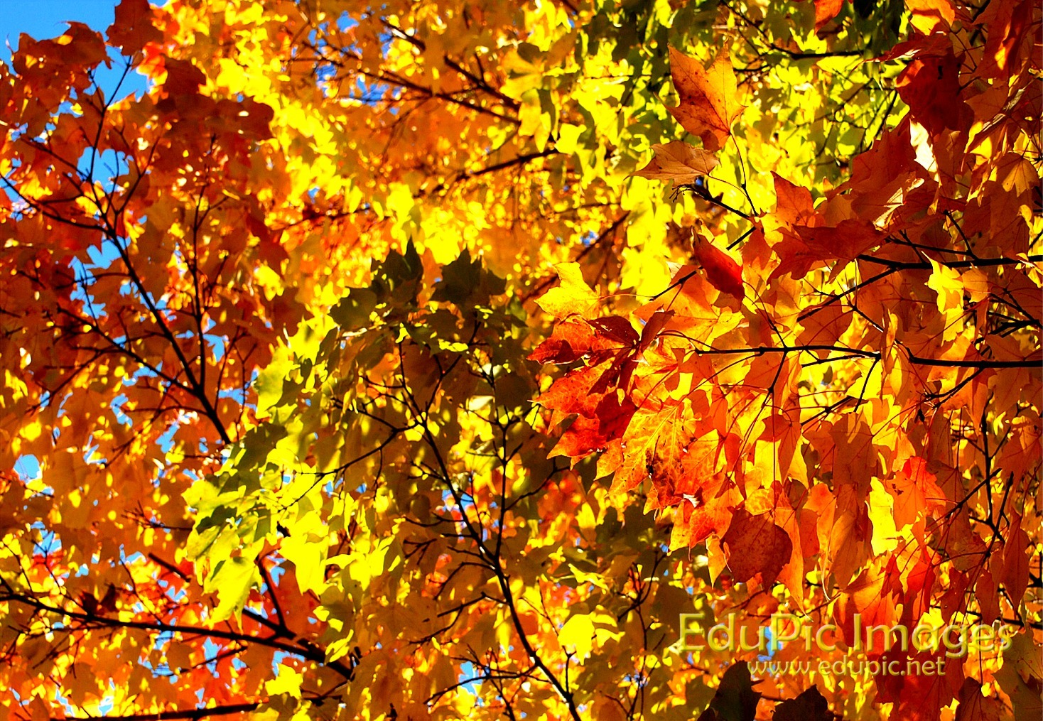 Fall Colors Desktop