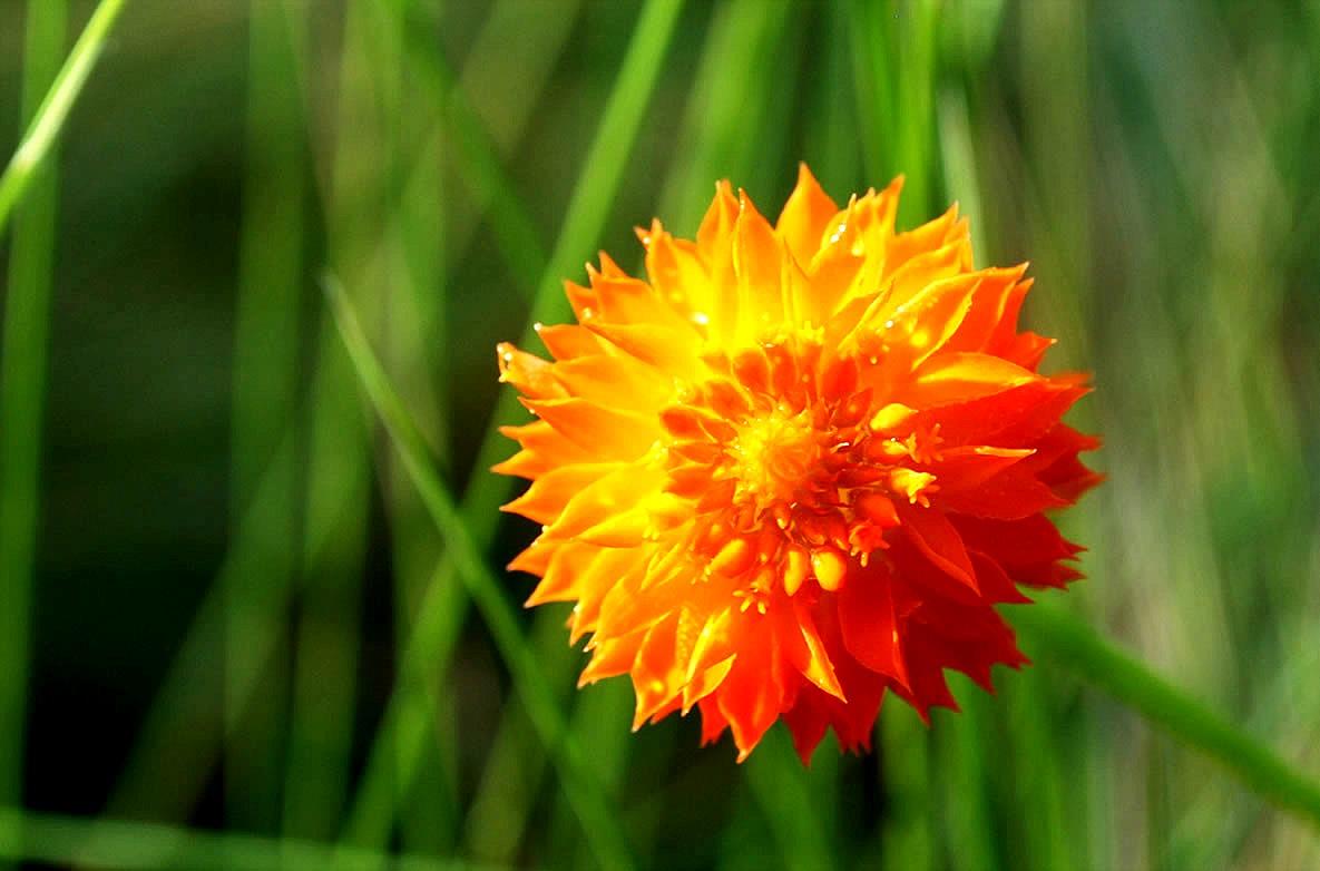 EduPic Flower